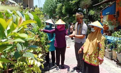 Surabaya Punya Kampung Sayur Kampung Percontohan Hidroponik